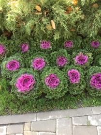Iasi Botanical Garden 2