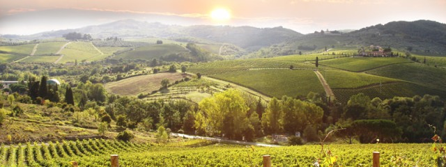 Italy Vineyard Generic