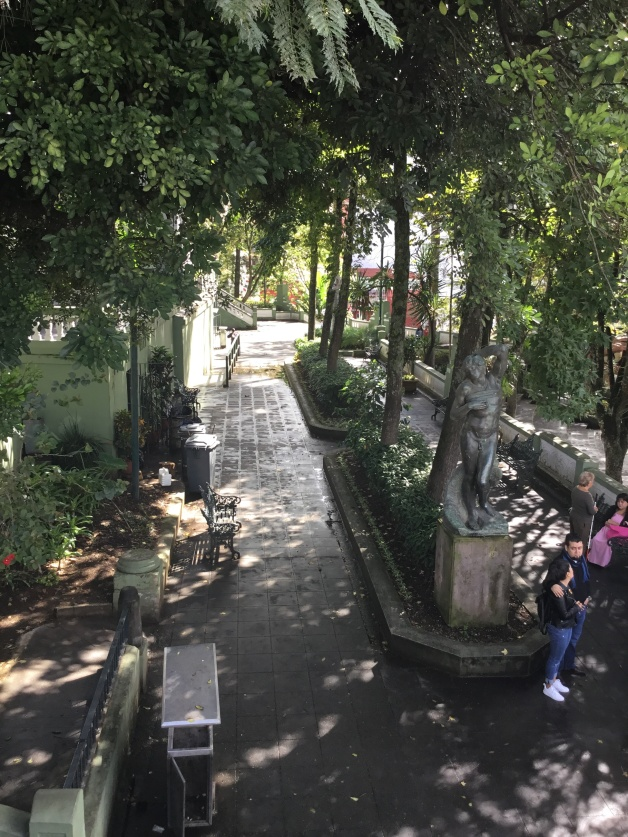 Mexico Street Trees
